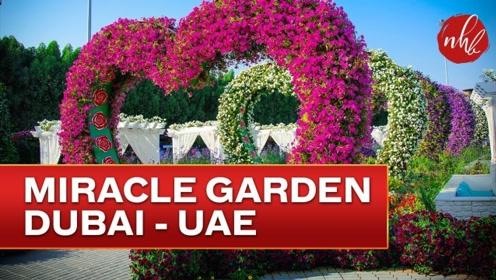 世界上最大最美的花园就在迪拜,越看越喜欢