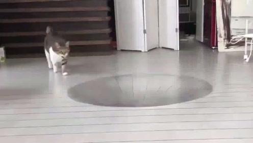 在地上画3D大坑骗猫,却被猫咪一秒看穿,镜头记录搞笑瞬间!