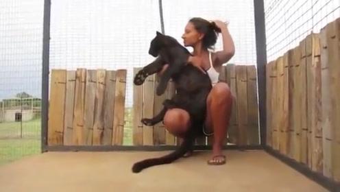 黑豹扑向女子的怀里,网友:这不就是只大黑猫吗?
