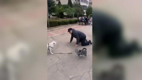 老人遛狗反被带倒,这该怪谁?