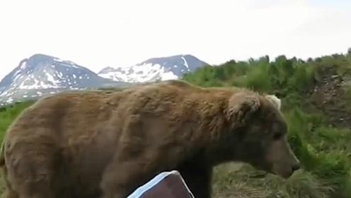 男子钓鱼身旁有动静,仔细一看来了只棕熊,网友:不敢动