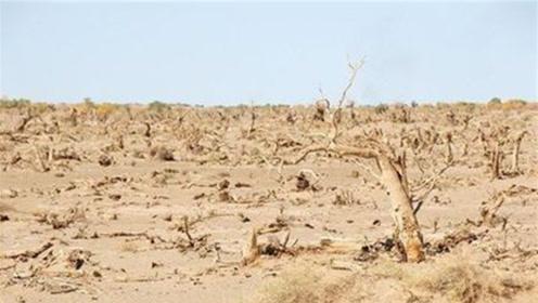 地球上第一个将要消失的沙漠,就在中国,中国人对它做了什么?