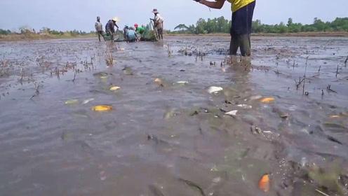 排水渠中密密麻麻全是鱼,村民们忙活半天,下一幕满载而归