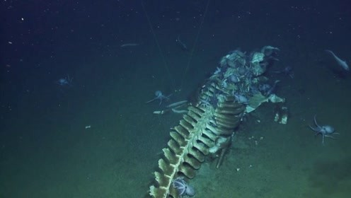探险家在深海发现,一具长5米的骨架,专家看后:一切都值了!