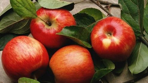苹果到底早晨吃还是晚上吃?营养师:告诉你2个适合吃苹果的时间