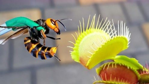 捕蝇草是如何捕捉食物的?放进去木棍会被消化吗