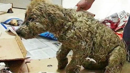男子在泥坑里救出一只小狗,带回家洗干净后吓一跳:这根本不是狗