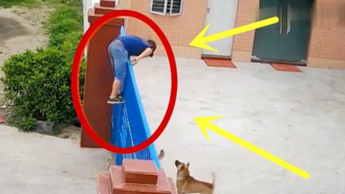 光天化日之下两男子翻进院子,强行带走狗狗,得知真相主人怒不可遏!