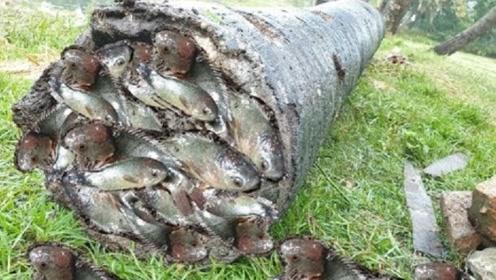 小伙池塘边捡到一根烂树桩,凑近一看,里面藏满了鱼!