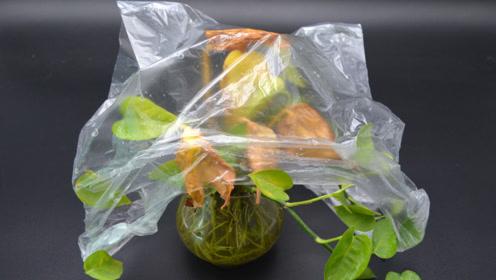 不管养什么花,花盆上套个塑料袋,不黄叶不生虫,邻居见了纷纷学