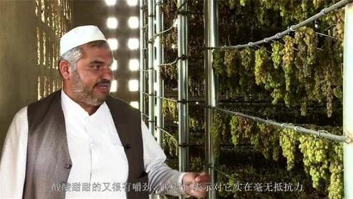 吃葡萄干前,究竟要不要清洗呢?听听生产葡萄干的新疆人怎么说