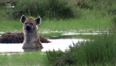 非洲二哥过的真惬意,在大草原泡起了澡,没谁了