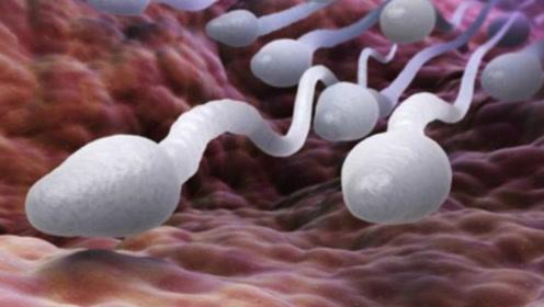 受精卵是如何形成的?镜头还原其过程,让人感到不可思议!