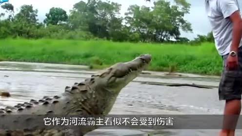 看完鳄鱼剥皮全过程,你还想买奢侈品吗?人类真该反思了