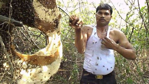 印度养蜂人胆子是真大,一把蜜蜂直接塞满嘴,不怕蜇反倒很享受!