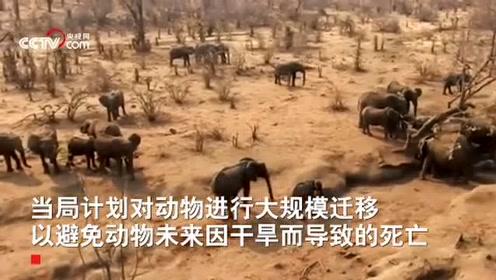 非洲南部遭逢大旱 津巴布韦大象死亡数上升至200