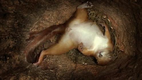 在松鼠窝里安个摄像头,看看松鼠一天都在干嘛?镜头记录全过程