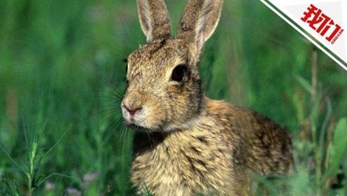 内蒙古锡林郭勒盟一病人被确诊为腺鼠疫:曾剥食过野兔