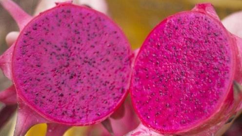 生活小技巧:如何挑选出新鲜香甜的火龙果?这样做准没错!