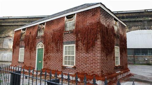 世界上最奇葩的房子,保质期只有30天,网友:免费也不住
