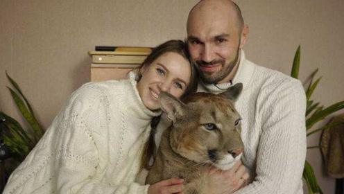 主人领养美洲狮当宠物,大猫不仅卖萌还拆家,网友:你被踢出群聊
