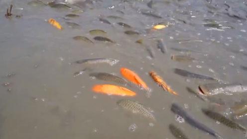 抽水捉鱼,这是一件快乐的事情