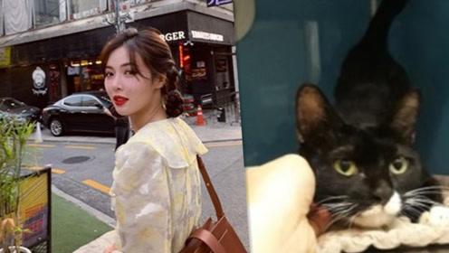 泫雅爱心救助车祸流浪猫 治疗到送养一手包办