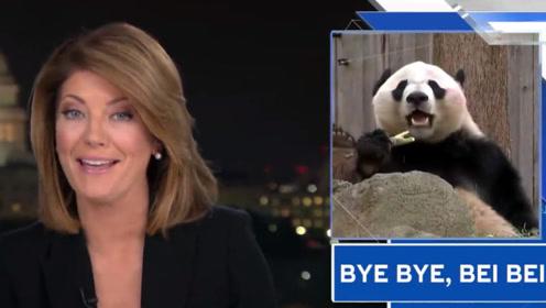 说到这个中国国宝 美国新闻主播都变温柔了