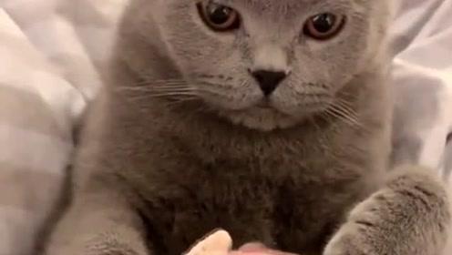 猫咪:养不起我就直说,不用来这些虚的!