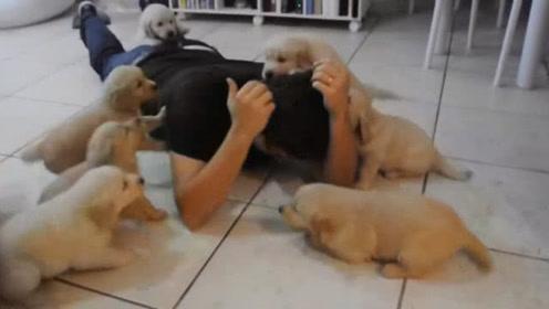 """狗子们集体""""围攻""""主人,主人无奈趴在地上,这画面让人笑到模糊"""