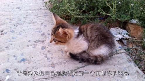 小猫每天被女子投食,却不被收养,原来是因为这个