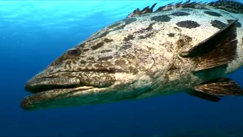 中国四大名鱼之首,被无数人们追捧的终极食材