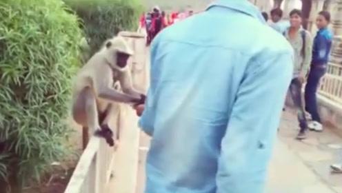 印度男子给猴子喂食,下一秒一耳光拍翻猴子,猴子当场就懵了!