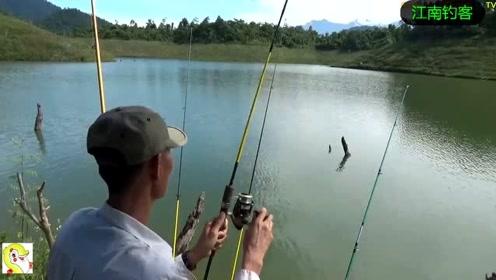 水库边这样的环境钓鱼就是一个享受,钓竿撒下大肥鱼就来咬钓
