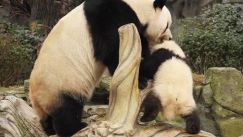 熊猫宝宝弄得全身脏兮兮,被熊猫妈妈看到后,这下可惨了!