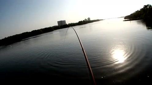 活虾前打钓鱼,海口果然有巨物,70几厘米刷新个人记录