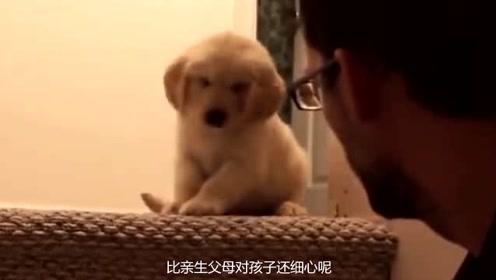 主人亲自教狗狗爬楼梯,主人还全程守护,一直用手保护狗狗安全