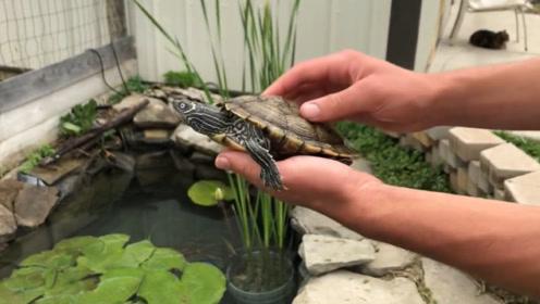 """男子将乌龟当宠物,7年后竟长出了""""绿毛"""",去医院检查后乐坏了!"""