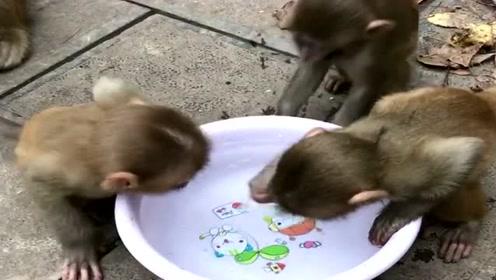 多可爱的一群小猴子,小动物是人类的好朋友,要和平共处!