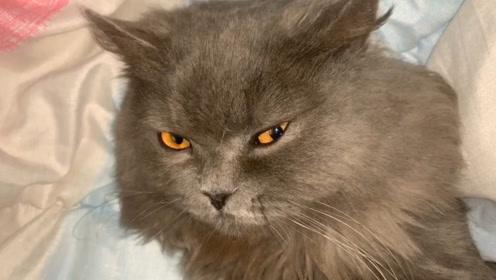 别人撸猫VS你撸猫,还真是没有对比就没有伤害!