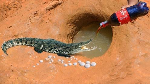 把可乐曼妥思倒进水坑中,不料出现一只大家伙,小哥直接傻眼了!