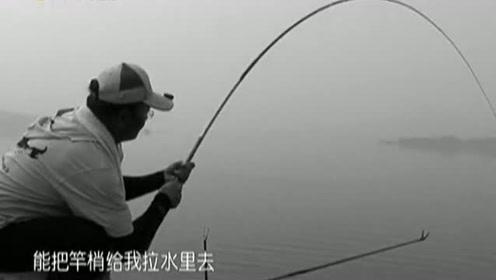 鱼还没有出水面,钓友从力道就能判断出这鱼有7斤左右