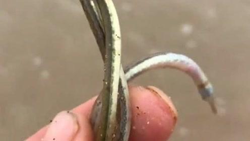 渔民从海底打捞到的三条小鱼,据说价值一百块钱呢,但还是要把它放生的!