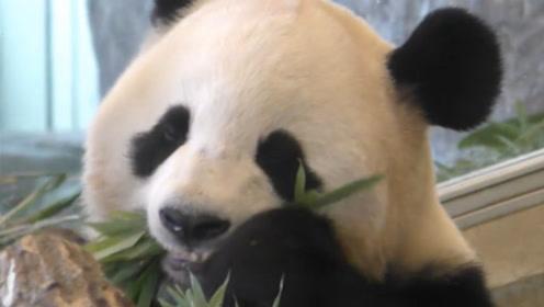 当一个吃货犯困了是什么样子,看到大熊猫的反应,让人笑到扶墙