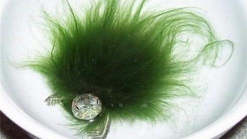男子养的乌龟浑身长满绿毛,拿去医院检查,结果发现自己捡到宝了
