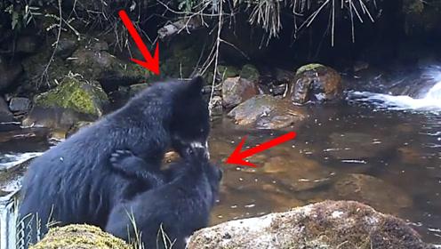 熊妈妈带着小熊过河,下一秒憋住别笑,网友:是亲妈无疑了!