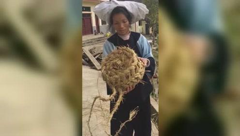 5旬布依族大妈用稻草做凳子40年,网友争相购买:快失传了