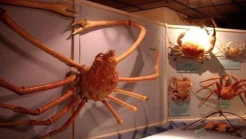 """堪称""""巨无霸""""的螃蟹,把鲨鱼当做食物,已有60人命丧其口"""