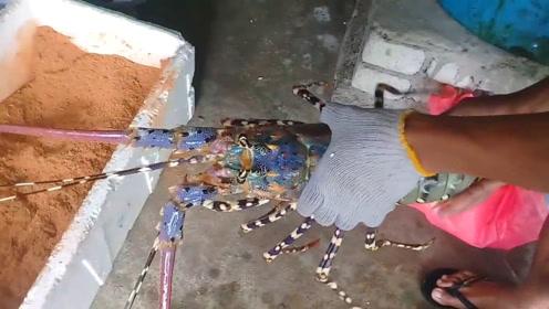 打包大龙虾,先冰镇再裹上木屑,防止它乱跳!