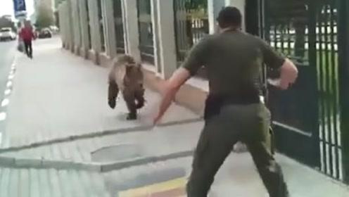 棕熊越狱出逃,被壮汉一脚踢到墙上,网友:俄罗斯的吧!